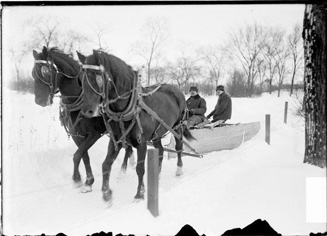 Почистват парка Линкълн в Чикаго с коне, 1903 г.